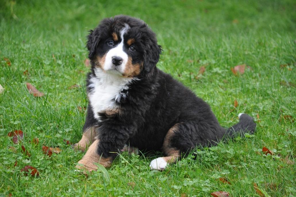 Cerchi un cucciolo di razza? Scopri come scegliere l'allevatore giusto!