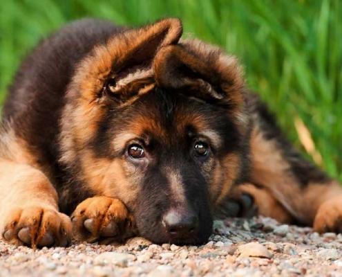 Epilessia nel cane: cause. sintomi e cure